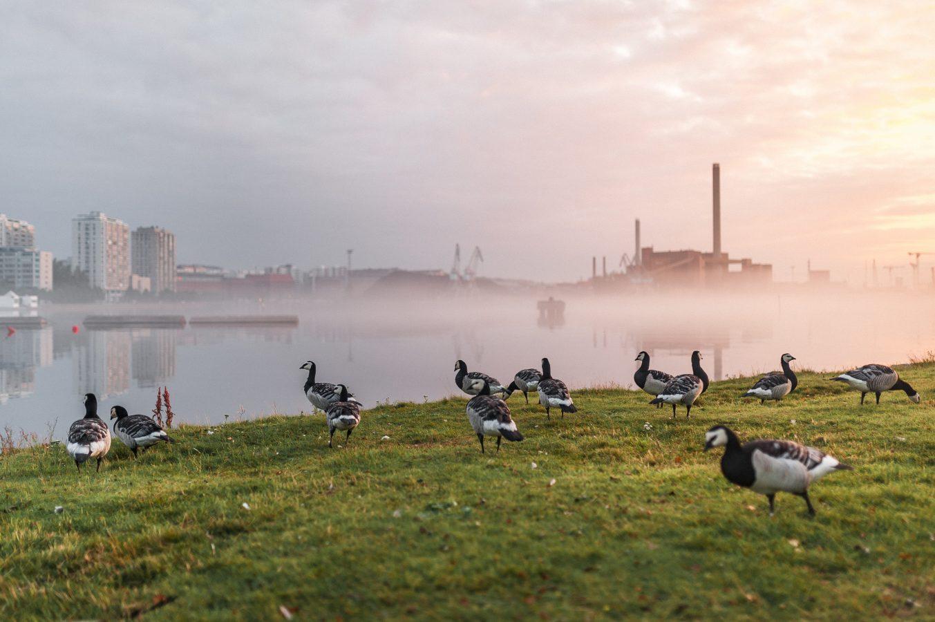 Helsingfors söker en ersättare för stenkol – priset för utmaningen är en miljon euro