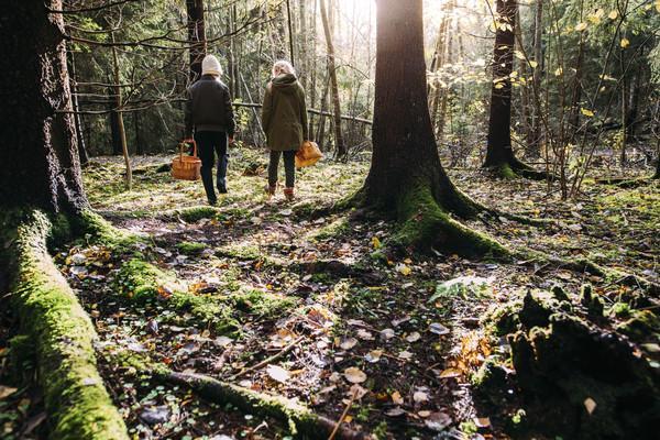 Ihmisiä sieniretkellä metsässä.