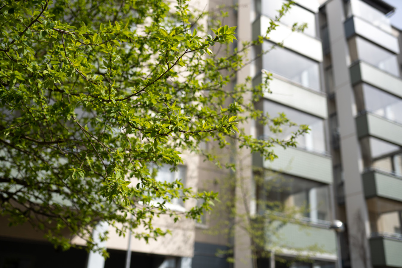 Taloyhtiö Harmajankadulla, jossa vehreä puu on talon edessä. Kuva: Jussi Rekiaro.