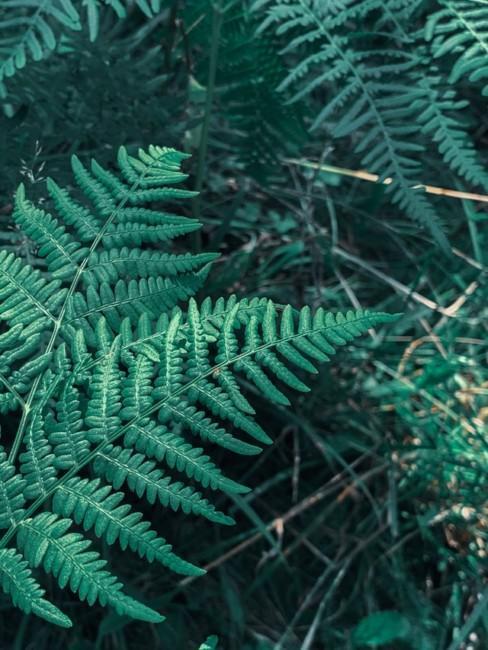 Green Net Finland